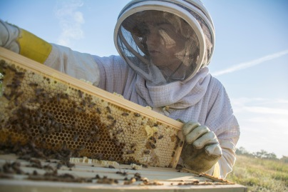Brianna Wells, 16 of OKC, pulls out a comb out of a beehive